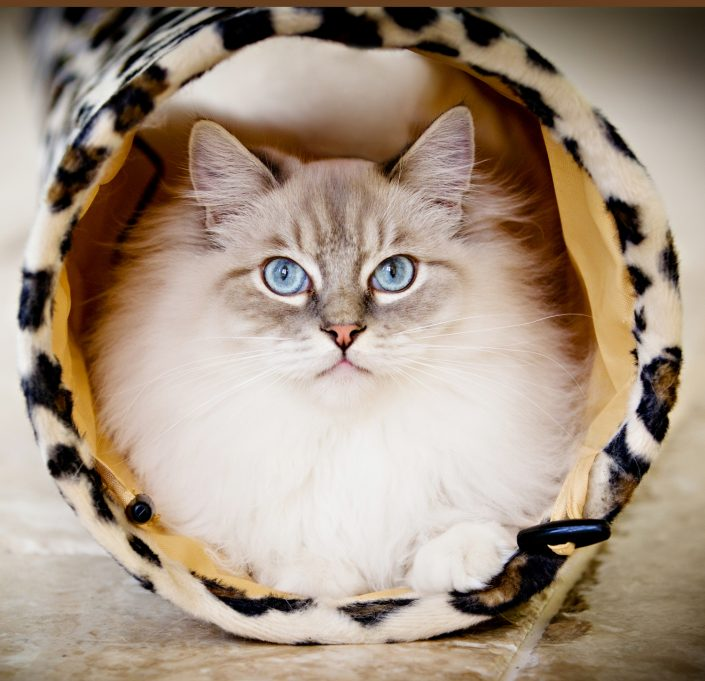 Furry cat sitting inside a hole | Anne Lord Photography